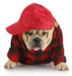 Hund-mit-Cap